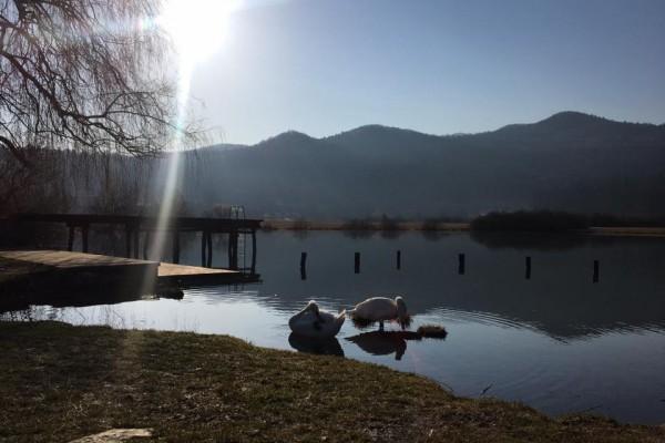 gostilnica-jezero-007F96604E2-9E50-00D7-9B3C-4CD48742A17C.jpg