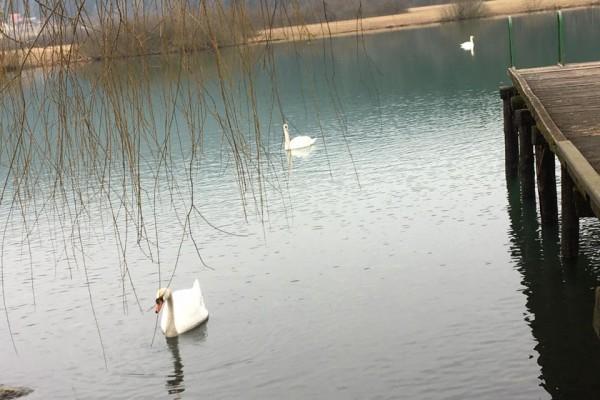 gostilnica-jezero-0164967DAEE-517B-8406-DA32-BA058016F518.jpg