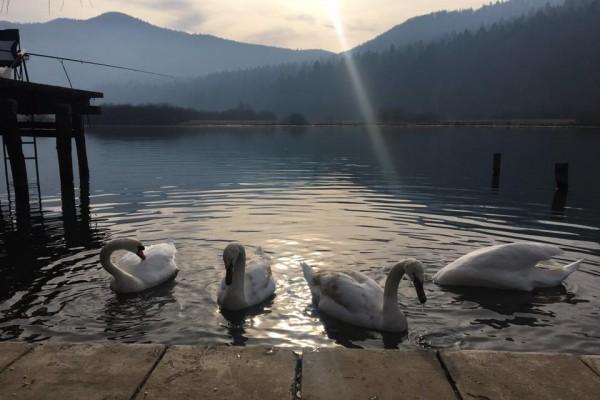 gostilnica-jezero-0289408597F-3DF5-6FAD-C33F-4B610B1F82E8.jpg